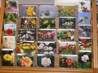 Bilder zu: Fotokarten