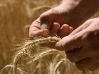 Bilder zu: Ackerbau