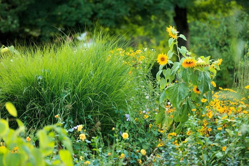 Blumen_Park_web