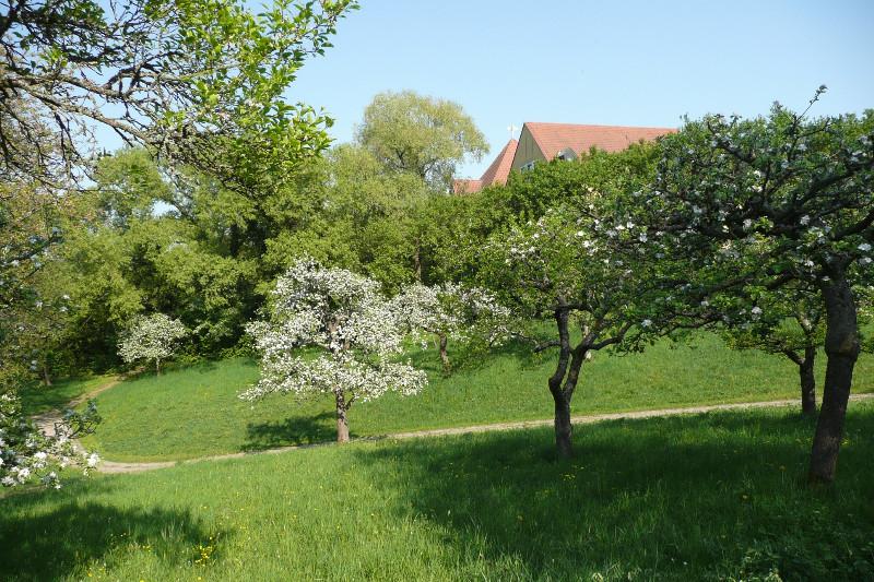 MH-Garten-Frühling-2